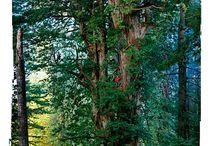 old logging pix / by Don Warner