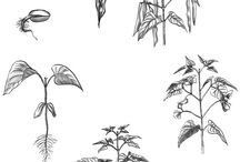 Lifecycle of a plant