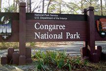 Natl Congaree SC / by Laura G