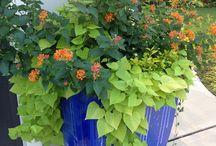 zahrada, rostliny