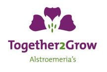 G-Fresh grower Together2Grow / Together 2 Grow is a collaboration of 2 prominent production companies within the alstroemeria cultivation. Van Veen Alstroemeria (located at Schipluiden) and BZ Alstroemeria (located at Poeldijk) have bundled their forces in the fields of cultivation and sales. This has led to the collaboration now known as Together 2 Grow.