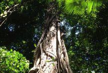 Suriname / Holiday in Surinam