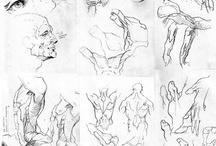 Brigdman anatomy