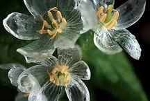 Kummalliset kukat / Weird flowers
