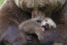 US Kills Wolves and Bears in their sleep!