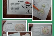 Science / Science activities, foldables, worksheets, and more!