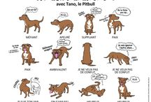 chiens documents.