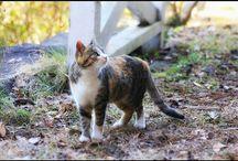 今日はポカポカ陽気ですね。 a cat with sunny day #cat #sunnyday #farm #猫 #ポカポカ陽気 #今日じゃないけど #今年ですらないけど写真