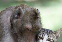 Amizades insólitas