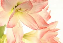 Beautiful flower / Flower pictures~