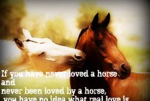 Horses / by Cassie