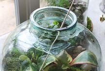 moss fern and terrarium info / by Jenny Lynn Santiago