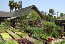 Homesteading / by The Gracious Pantry
