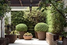 jardim de varanda ou corredor