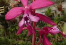 orquideas0
