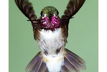 Hummingbirds & Feeders / by Cindy Johnson
