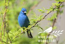Wild Bird Wednesday! - Bird Images & Facts