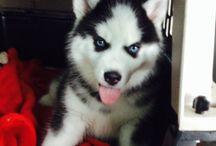 Puppies / Pets