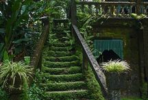 jardins d'ombres