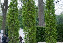 Upright/fastigiate trees / Narrow trees with an upright habit