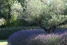 Trädgård France