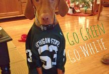 College Pups / These pups can rock the college brand!