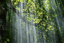 Bäume und Landschaften