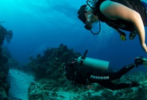 Scuba Diving in Mexico / Get some serious wanderlust with the best places to scuba dive in Mexico like Cancun, Cozumel, Isla Mujeres, etc.