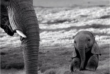 Elephants Are Blessed Creatures!