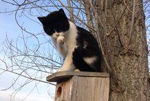 Kočky a ptáci