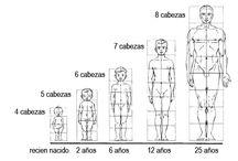 proporciones cuerpo humano
