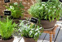 Mon balcon terrasse - inspiration (décos et plantes)