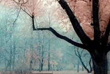 Enchanting TREES / by {em}eline Seet
