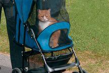 Cat Strollers
