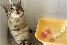 Kediler ve köpekler... / Güzel kedim.