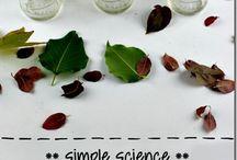 scienze biologia