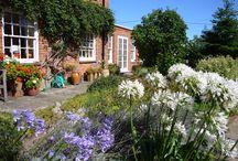 Blue  Skies of Summer / How a little sunshine makes all the difference to our gardens