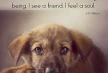 Inspirational Animals / Quotes, memes, and more to get you inspired as you provide great veterinary care!