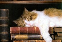 Cats and Books / Two of my favorite things........add a cup of tea, a comfy chair, and a fireplace.......heavenly!