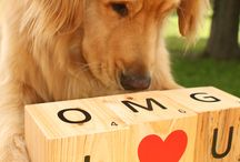 """Dogs dogs dogs... I love them / """"Dogs' lives are too short. Their only fault really."""""""