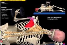Muscle si notion = 3d strength training
