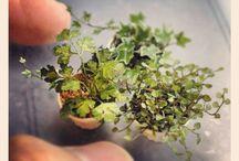 miniatures / miniatures