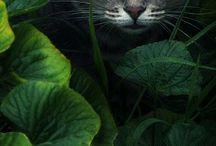 Animals / by Ilean Fulton