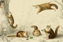 antique fauna studies