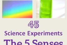 5 senses / Ideas for my preschoolers' 5 senses unit