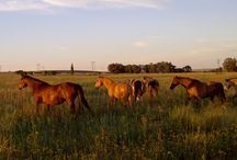 van der Linde ~ Horses