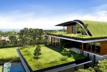 Green Roofs We Love
