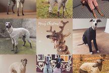 REhound dog clothes