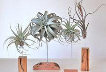 Air Plants Design Ideas
