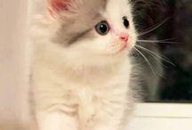 cuki macskák / cuki macskák